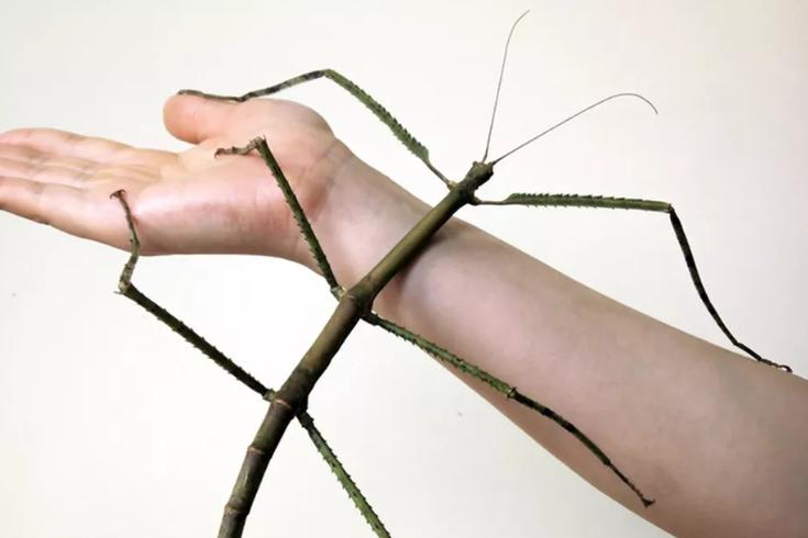 Kifejlődött a világ legnagyobb rovarja Kínában