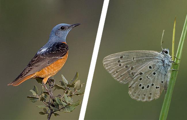 Hová tűnnek a madarak és rovarok?