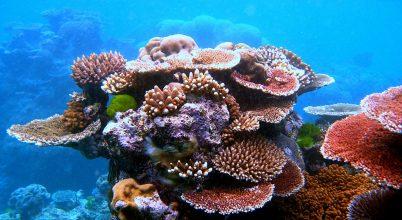 Ausztráliai magyar kutató küzd a korallok megmentéséért