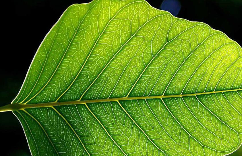A fotoszintézis egyik mechanizmusa segíthet a jobb napelemek megtervezésében