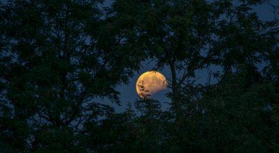 A nap képe: A csonka Hold kikukkant a lombok közül