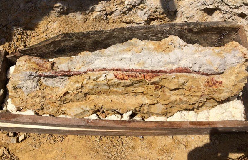 Gazdag leletanyaggal zárták a terepi munkát a hazai paleontológusok