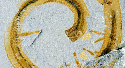 A szimbiózis egyik legősibb példáját fedezték fel