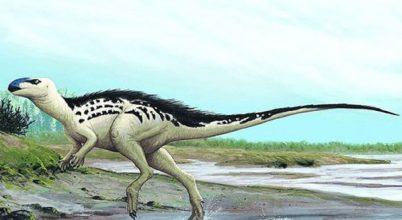 Új dinoszauruszfajt találtak Csehországban