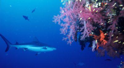 Sokkal tovább élhetnek a cápák, mint eddig hittük