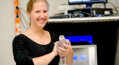 A galambok az embereknél is jobbak a multitasking feladatokban