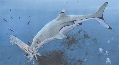 Meglepő leletet találtak a 200 millió éves halgyík gyomrában