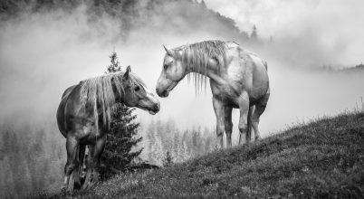 A nap képe: Szabad lovak Biharban