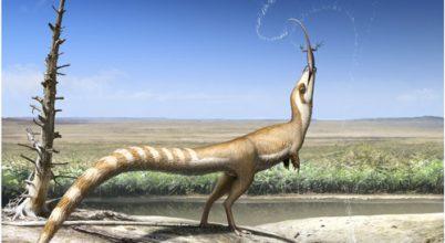 """""""Maszkkal"""" álcázta magát a 130 millió éves dinoszaurusz"""