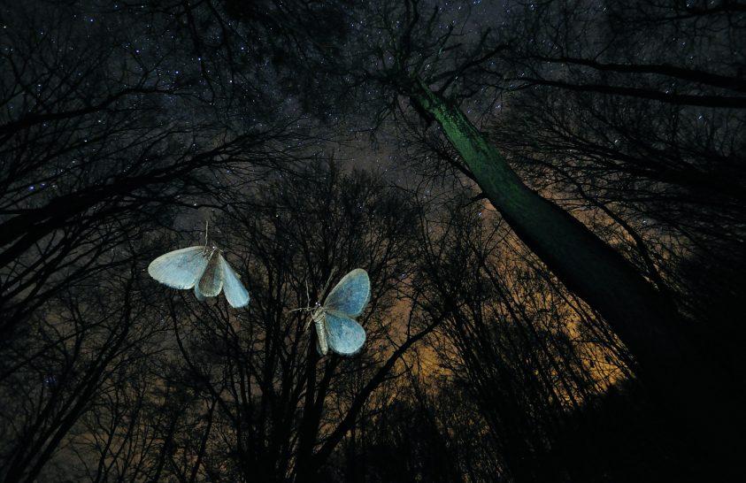 Magyar különdíjasok, kiváló természetfotók, ünnepélyes díjátadó
