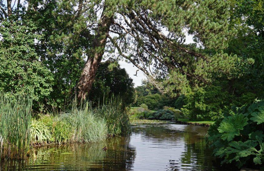 Miért is fontosak a botanikus kertek, világszerte?