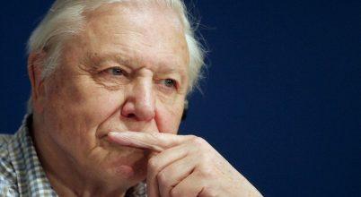 David Attenborough azonnali lépéseket sürget a műanyagok ellen