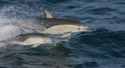 Az éghajlatváltozás megrövidíti a tengeri táplálékláncot