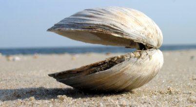 A tengeri kagylók és férgek is hozzájárulhatnak a klímaváltozáshoz