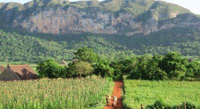 A földi édenkert: kávé, dohány, mangó