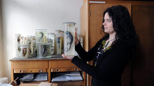 Új békafajt fedezett fel egy magyar kutató