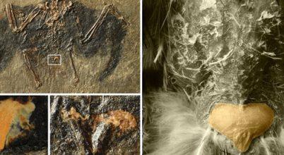 48 millió éves zsírt találtak német kutatók