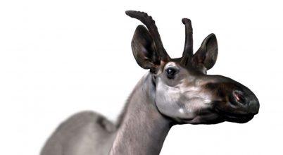 Hatalmas zsiráfféle maradványaira bukkantak