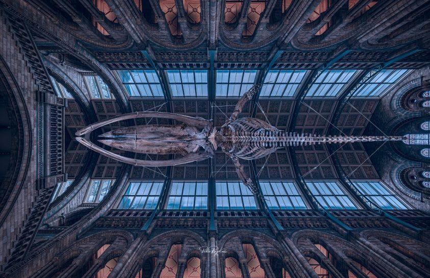 A nap képe: Repül a bálna