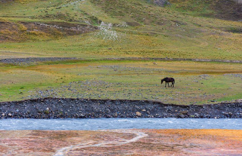 A nap képe: Magányos ló