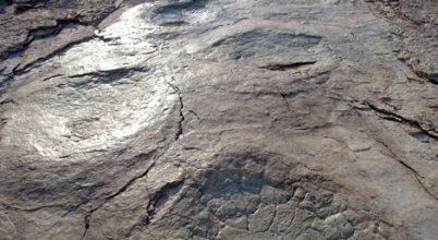 150 méter hosszan hagyott nyomokat az óriási dinoszaurusz