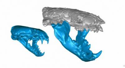 Igazi csúcsragadozó lehetett az óriási vidrafaj