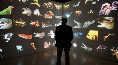 Magyar állatkert különleges élőlényei a virtuális bárkán