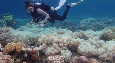Sikeres volt a korallátültetés a Nagy-korallzátonyon