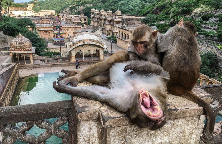 India különleges szentélyei