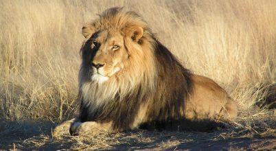 34 veszélyeztetett faj kapott kiemelt védelmet az ENSZ-től
