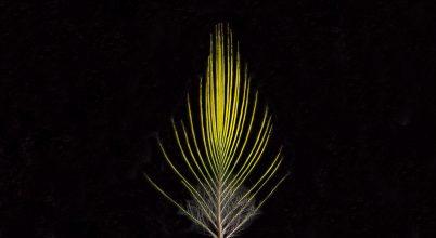 Először találtak hibrid madárfajt Amazóniában