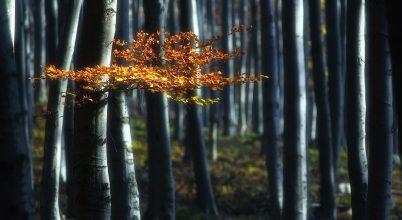 A nap képe: Ezüst erdő