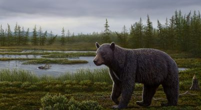 Ősi medvefajra bukkantak az északi sarkkörön túl