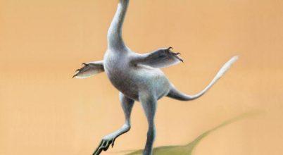 Bizarr külsejű, apró dinoszauruszra leltek Mongóliában