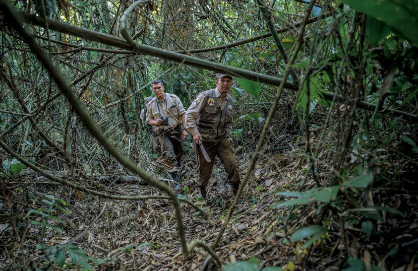 Jaguárok és vadorzók nyomában