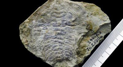 530 millió éves szemet találtak a kutatók