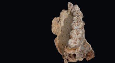 Megtalálták a legősibb Afrikán kívüli embermaradványt