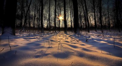 A nap képe: Naplemente a téli erdőben