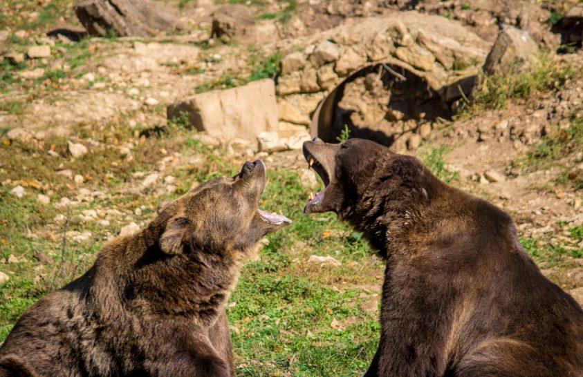 A nap képe: Medvék nézeteltérése