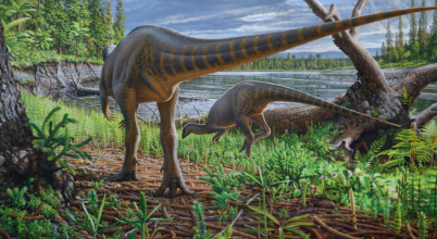 Pulyka méretű dinoszaurusz járt az ausztrál-antarktiszi hasadékvölgyben