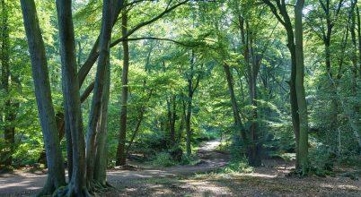 6000 év elég volt, hogy kiirtsuk az európai erdők felét