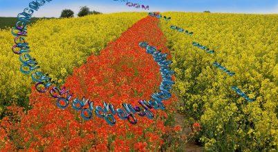 GMO döntések kerüljenek tagállami hatáskörbe!