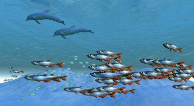 Egyre kevesebb az oxigéndús óceáni övezet