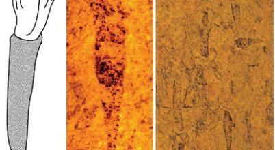 """450 millió éves """"fagylalttölcsért"""" találtak"""