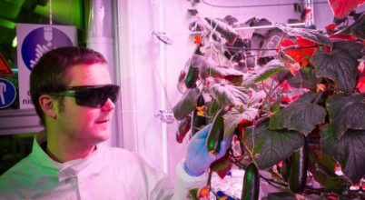 Retket, salátát ültetnek az Antarktiszon