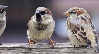 Egyre kisebbek lehetnek egyes madarak a klímaváltozás miatt