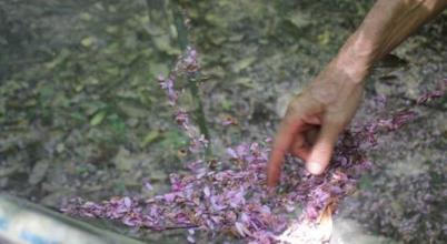 Több virágot hoznak egy trópusi erdő fái a klímaváltozás miatt
