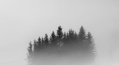 A nap képe: Ködbe veszve