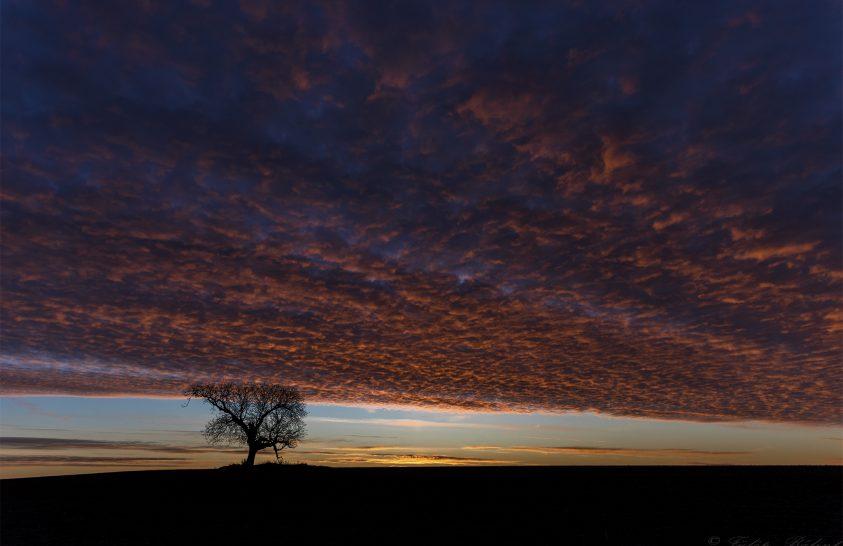 A nap képe: Napkelte öreg diófával
