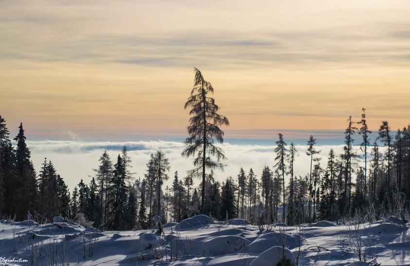A nap képe: A Magas-Tátra égig érő fája